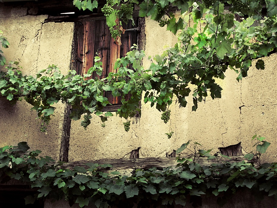 photoblog image Vines and a Window